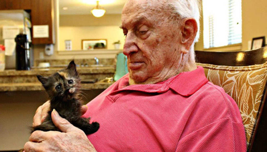 Senior man playing with black kitten