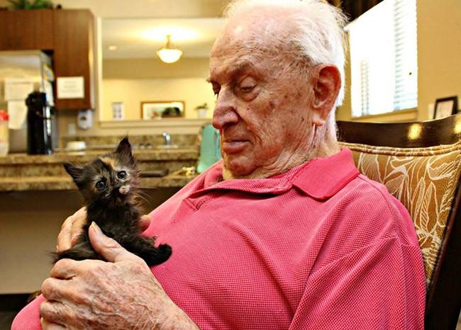 Senior man playing with black kitten