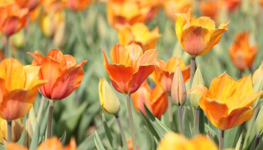 Yellow, orange flowers.