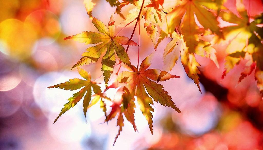 Fall leaves - colorful