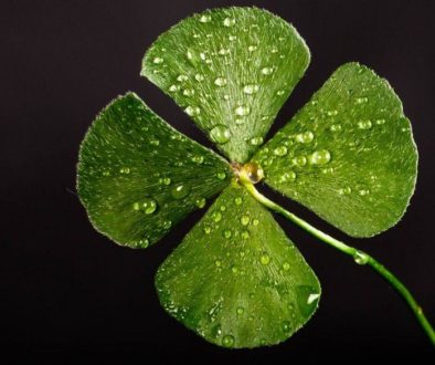 Four leaf clover for St. Patty's Day.