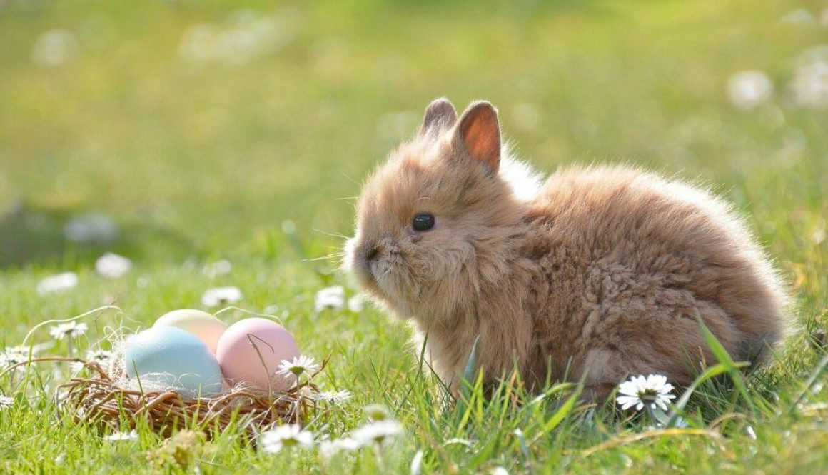 A bunny sitting with Easter eggs.