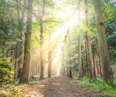 Experts suggest seniors spend more time in nature.
