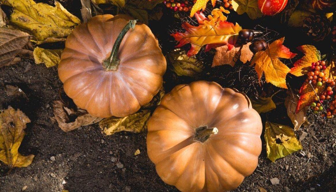 Keeping elders with dementia safe during Halloween with pumpkins.